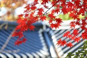 fall leaves with a roof in the background